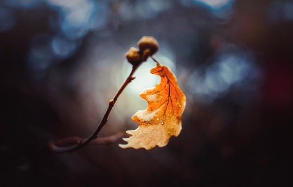 Picture autumn, macro, sheet, branch, bokeh