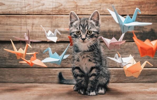 Picture cat, mustache, interest, surprise, paws, blur, tail, choice, colorful, different, origami, cat, Tomcat, paper, crane, …