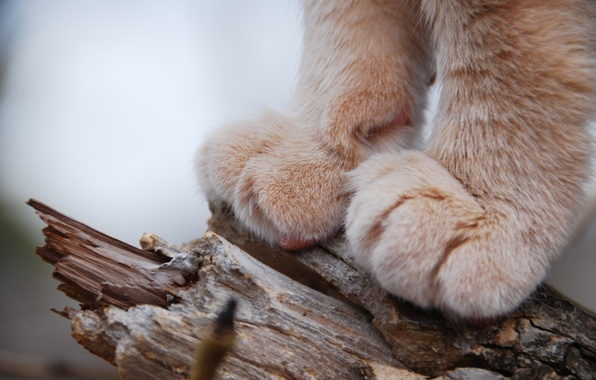 Picture cat, animals, paws