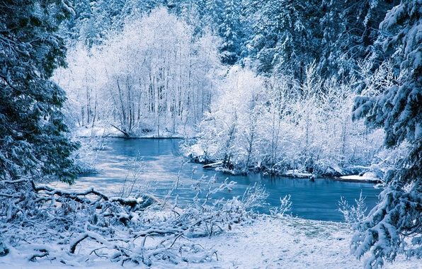 Picture FOREST, NATURE, SNOW, WINTER, TREES, RIVER