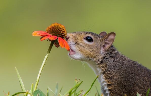 Picture flower, protein, animal, curiosity, gaylardiya