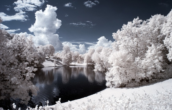 Picture winter, forest, the sky, clouds, snow, trees, landscape, river, shore, the evening