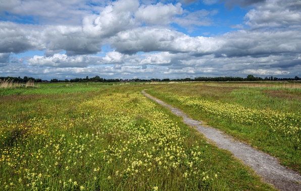 Picture field, summer, the sky, grass, clouds, flowers, meadow, path
