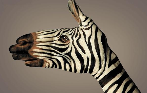Picture strips, black and white, hand, Zebra