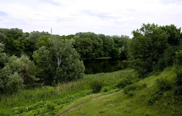 Picture grass, trees, river, trail, Ukraine, Sloboda, Seversky Donets