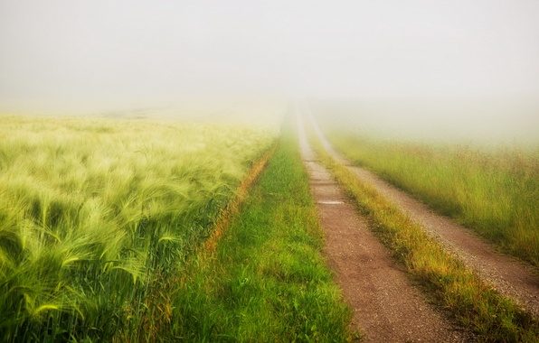 Picture road, field, summer, fog
