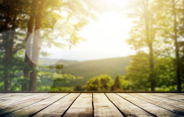Picture forest, summer, the sky, the sun, macro, rays, light, trees, nature, mood, Board, focus, blur, …