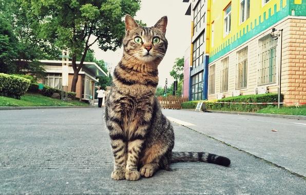 Picture cat, look, street, Koshak