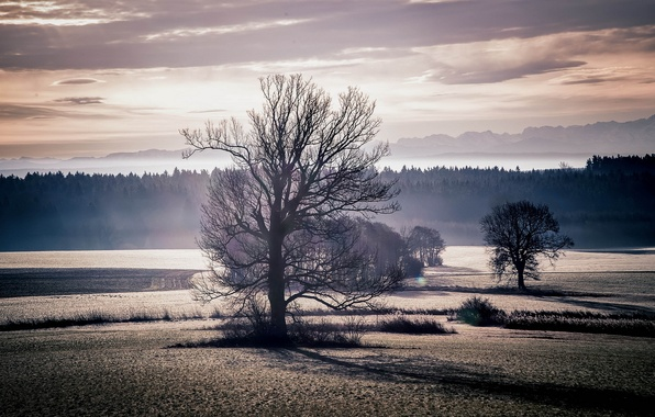Picture field, trees, landscape, sunset