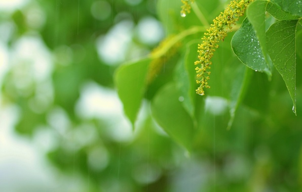 Picture greens, summer, leaves, drops, macro, sprig, rain, green