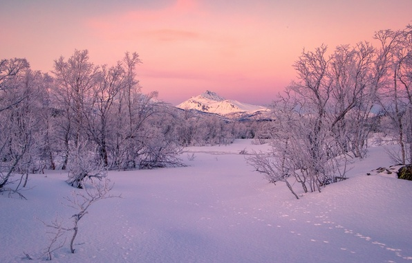 Picture winter, snow, trees, mountains, traces, Norway, Norway, Troms, Koford, Kvæfjord, Troms county
