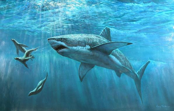 Picture WATER, The WORLD, UNDERWATER, The OCEAN, SEALS, SHARK, SEA