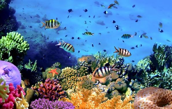 moving aquarium wallpaper ipad collections