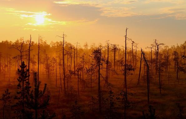 Picture forest, landscape, sunset