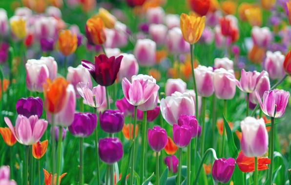 Photo wallpaper flowers, paint, tulips, colorful, different