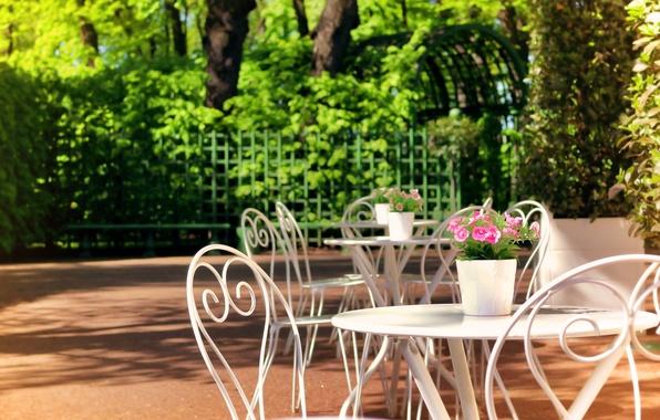 Picture the sun, flowers, foliage, Saint Petersburg, Summer garden