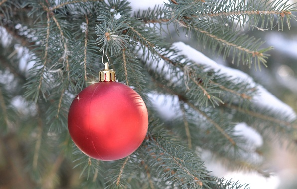 Picture new year, Christmas, spruce, branch, ball, decoration