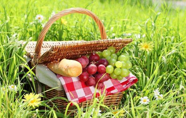 Picture summer, grass, basket, chamomile, bread, grapes, picnic, baton