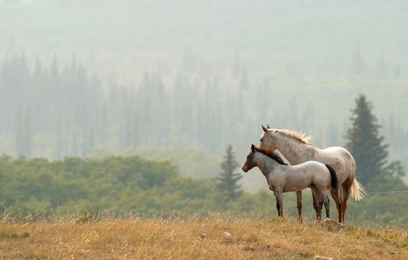 Picture FOREST, PAIR, HORSE, TREES, VALLEY, The EDGE