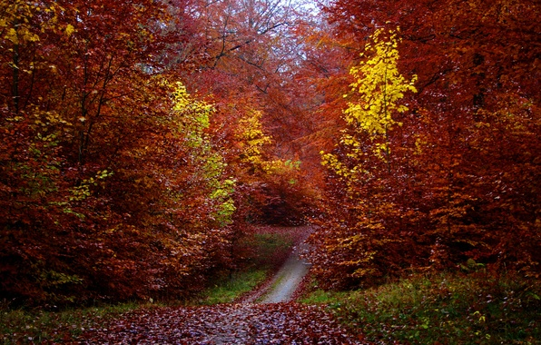 Picture autumn, forest, leaves, trees, foliage, path