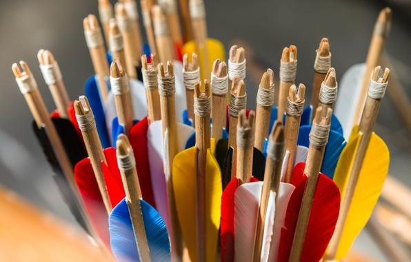 Picture macro, blur, beautiful, bright, colorful, arrows, quiver, bokeh, tail, arrows, wallpaper., shank