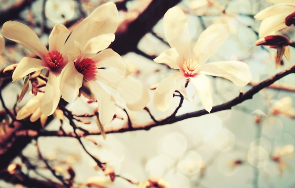 Photo wallpaper flowers, color, vanilla, tree, pastel