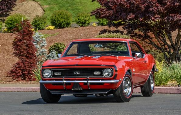 Picture Chevrolet, 1969, Camaro, Chevrolet, Camaro, Yenko, COPO, SC 427