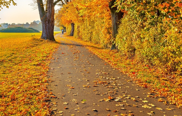 Picture road, autumn, leaves, trees, landscape, people, yellow