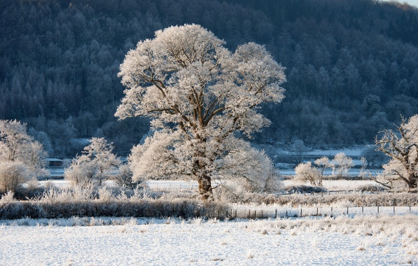 Picture winter, frost, forest, snow, trees, tree, fence, slope, hill, shrub
