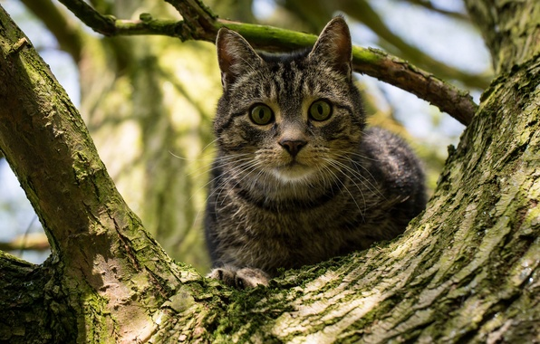 Picture cat, cat, look, tree, on the tree