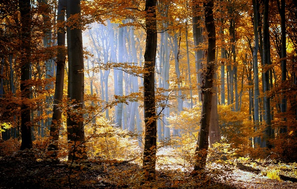 Picture autumn, forest, grass, leaves, the sun, light, trees, nature, yellow, orange