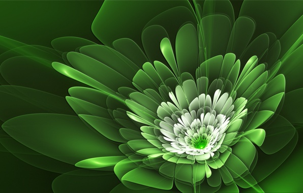 Picture flower, line, petals, green