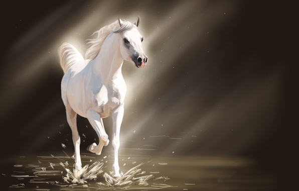 Picture water, light, squirt, horse, horse, art, white, the sun's rays