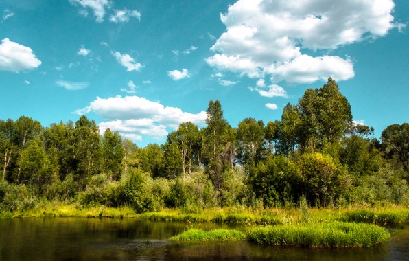 Picture greens, forest, summer, the sky, clouds, trees, river, shore
