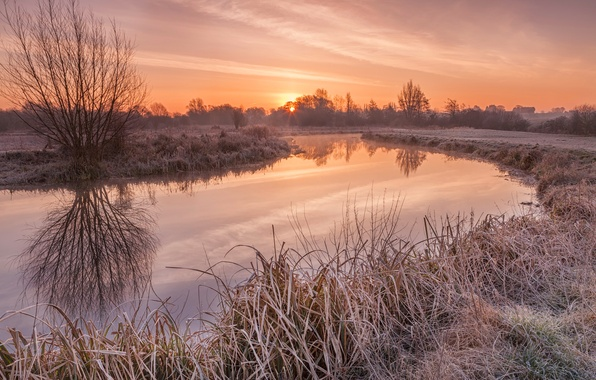 Picture frost, grass, the sun, trees, reflection, river, dawn