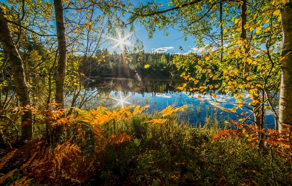 Picture autumn, trees, lake, Norway, fern