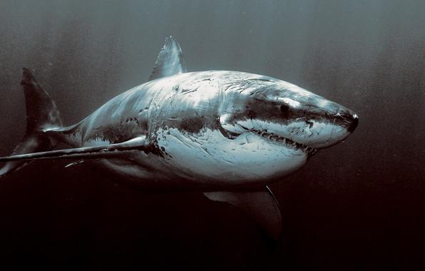 Picture the ocean, shark, horror