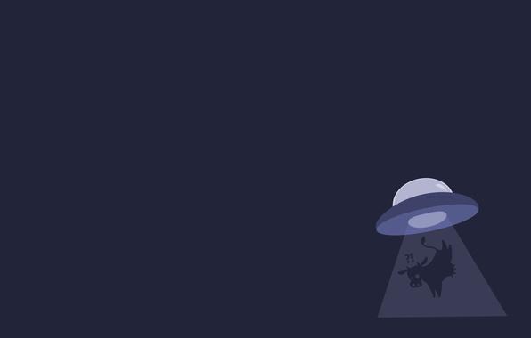 Picture UFO, cow, OVNI