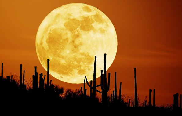 Picture the sky, night, the moon, desert, cacti