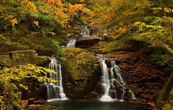 Picture autumn, forest, trees, stream, rocks, waterfall, stream