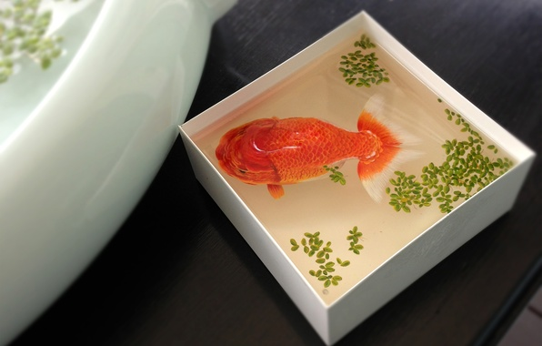 Picture water, box, fish, fish, the view from the top, gold, duckweed, capacity