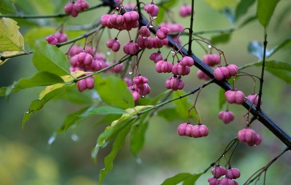 Picture leaves, drops, macro, rain, branch, flowers