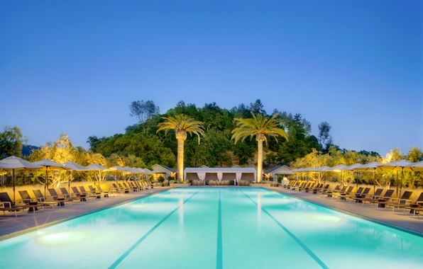 Picture trees, palm trees, pool, pool, sunbeds, exterior, the loungers., desigen, exterior