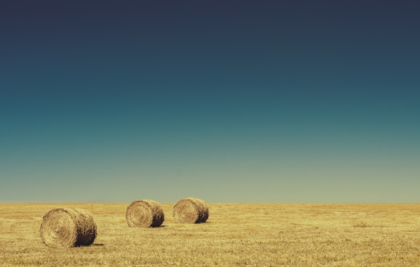 Picture field, the sky, horizon, hay