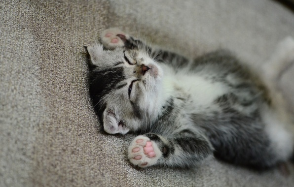 Picture legs, muzzle, sleeping, kitty