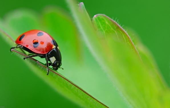 Picture macro, green, beetle, nasekomye