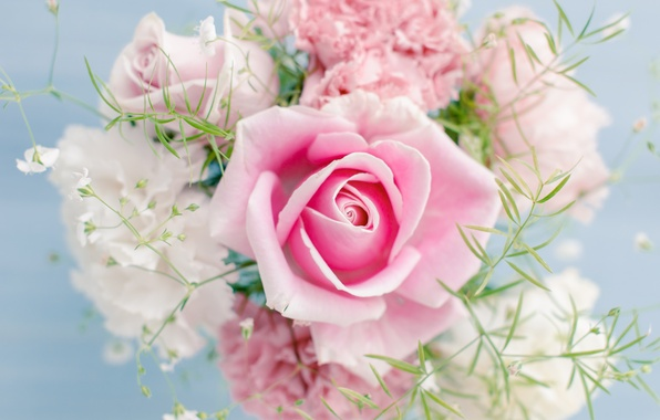 Picture flowers, beautiful, flowers, beautiful, Pink rose, Pink rose