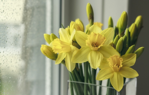 Picture window, buds, daffodils