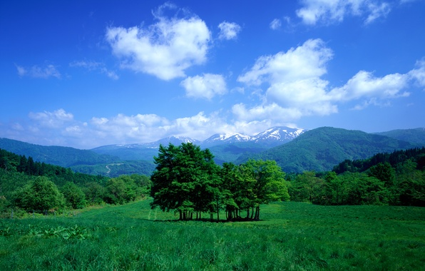 Picture the sky, grass, clouds, trees, mountains, valley, meadow