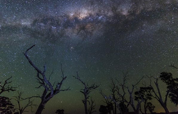 Picture space, stars, trees, night, the milky way